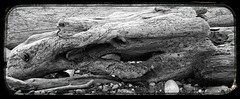 Here Be Dragons (wolfnowl) Tags: blackandwhite bw beach dragon bc britishcolumbia victoria driftwood yyj