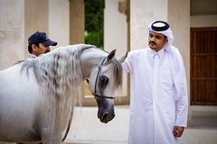 Royalty in Qatar (www.ziggywellens.com) Tags: world portrait horses horse outdoor champion serene contact sheikh royalty connection equine qatar interaction