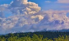 04-24-2016-Blue Sky Day! (Valerie Sauve-Vancouver) Tags: blue sky nature sunshine clouds outdoors treeline northvancouverbc maplewoodflatsconservation