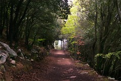 Santa Fe del Monyseny (Gatodidi) Tags: barcelona santa parque naturaleza verde del landscape nikon arboles camino natural paisaje catalunya fe parc senderismo catalua sendero rocas piedras d90 paisatje monyseny