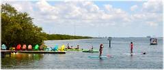 DSC_9217 (lagergrenjan) Tags: st bar boards florida getaway paddle rental petersburg tiki blvd kayaks gandy