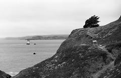 Hillside by the Pacific (bclook) Tags: sanfrancisco seascape monochrome landscape noiretblanc schwarzweiss leicam6classic summicron50mmf2 filmisnotdead fujineopanacros100 istillshootfilm bwfp