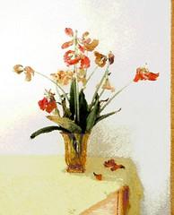 Abgeblhter Tulpenstrau (2) (Chironius) Tags: flower fleur blossom flor  fiore blte tulipa tulpen blten liliaceae  liliales  liliengewchse lilienartige lilioideae