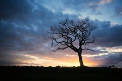 Horsford 29/04/2016 (Matthew Dartford) Tags: sky tree silhouette backlight landscape branch glow branches norfolk trunk backlit creapy goldenhour eastanglia happisburgh openskies breakinglight