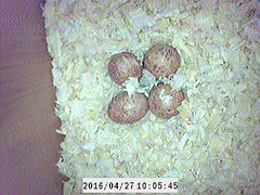 Nesting Box: Kestrals