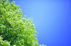 Optimism. (Michael Degenhart) Tags: blue trees summer colour green amsterdam contrast hope spring optimism collor collour
