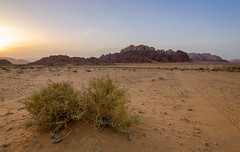 Rocky Rum (RJDonga) Tags: sunset rock bush sand desert outdoor dune east jordan rum middle wadi bedouin