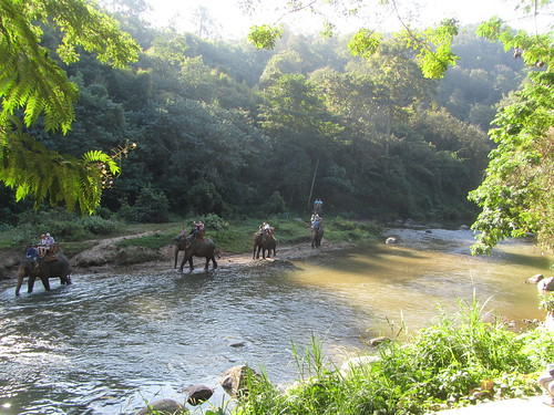 Thailand - Near Chiang Mai - Maetaman Elephant Camp - Elephants in river