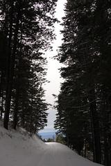 boise_peak-6 (grantiago) Tags: snowboarding skiing idaho boise snowmobiling noboarding boisepeak