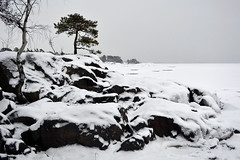 Snowy shore of Kuningatar (Kallahti, Helsinki, 20160110) (RainoL) Tags: winter snow cold finland geotagged helsinki january helsingfors fin seashore vuosaari 2016 uusimaa nyland kallahti kallahdenniemi kuningatar kallvik 201601 drottningen nordsj kallviksudden 20160110 geo:lat=6018387743 geo:lon=2515433558