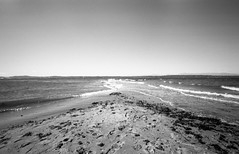 Point, Discovery Park. (Matt Benton) Tags: seattle blackandwhite 35mm zeissikon discoverypark voigtlandersuperwideheliar15mmf45