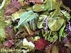 Salată de verdețuri