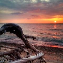 Twisted wood (ossington) Tags: toronto ontario canada sunrise driftwood scarborough lakeontario