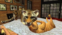 Family (alexandriabrangwin) Tags: world morning family cats max love animal cat computer cub ginger 3d big bed bedroom graphics different frolic brothers tiger small sunday whiskers secondlife virtual blanket cuddle species setting roscoe duvet cgi mew alexandriabrangwin