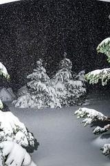 Storm Jonas 2016-20160123_DSC2819.jpg (tinstafl) Tags: trees snow night snowing snowcoveredtrees snowcover