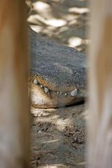 _DSC9634 (alfaluis) Tags: animal zoo pato jardim macaco tigre urso zoologico