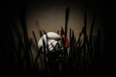 That's How The Story Starts (Kenny Dong) Tags: shadow grass canon toy toys 50mm creative story smurfs