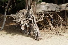 DSC02740_DxO_Grennderung (Jan Dunzweiler) Tags: sunset beach strand hawaii sonnenuntergang sundown jan kauai kee keebeach keebeach dunzweiler kee jandunzweiler