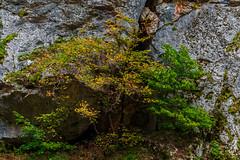 Colors of September: Gudyalchay canyon (Ilkin Kangarli) Tags: autumn mountains fall forest river azerbaijan canyon september caucasus
