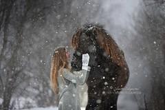 Winter And Snow (Hestefotograf.com) Tags: winter horses horse snow love oslo norway caballo bokeh pony camouflage cavalos ponies forever pferde dappled cavalo pferd whitehorse equine equus paard horseandgirl equinephotography equinephotographer hestefotograf