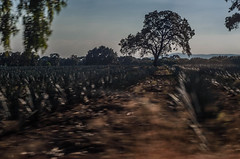 Campagna Messicana gave (Luca Michelutti) Tags: travel people nature colors mexico story l agave holydays atotonilco 2016 lucamichelutti