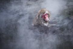 長野・地獄谷野猿公苑 ∣ Jigokudani Yaen-Koen (Snow monkey park)・Nagano [EXPLORED] (Iyhon Chiu) Tags: japan japanese monkey explore 日本 hotspring 自然 spa nagano 動物 サル jigokudani snowmonkey 長野 温泉 onexplore 2015 猴 猴子 猿 地獄谷 長野県 yaenkoen explored jigokudaniyaenkoen inexplore 地獄谷野猿公苑 野猿 雪猴 snowmonkeypark スノーモンキーパーク