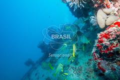 NE_Abrolhos0013 (Visit Brasil) Tags: horizontal brasil fauna natureza bahia nordeste externa abrolhos semgente subaqutica diurna