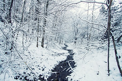 Mood Snow (Matt Champlin) Tags: life morning winter white snow cold home nature canon woodland woods woodlands stream quiet peace snowy peaceful calm chilly fingerlakes tranquil winterwonderland 2016 skaneateles