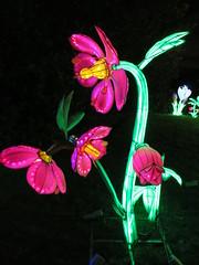 UK - London - Chiswick - Magical Lantern Festival - Flowers (JulesFoto) Tags: uk flowers england london chiswick chineselanterns chiswickpark chiswickhousegardens magicallanternfestival