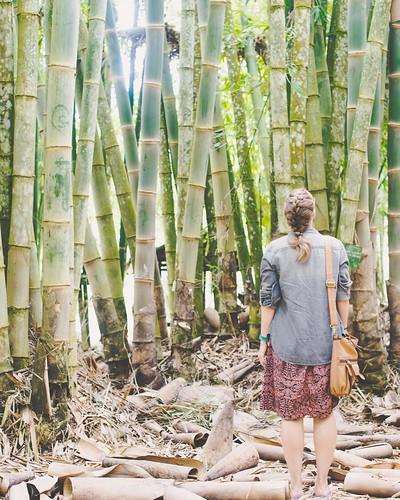Bamboo forests with @ohmyashlee