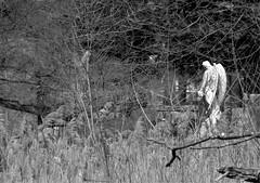 IMG_8955bw (Naturecamhd) Tags: nyc newyorkcity sculpture grave graveyard statue angel canon bronx gothic goth powershot thebronx gravemarker woodlawncemetery thewoodlawncemetery canonpowershotsx60hs sx60hs