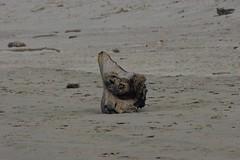 All Photos-9292 (jlh_lunasea) Tags: beach manzanita