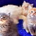 Lisa's Kittens