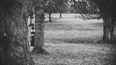 In The Shadows (Dell's Pics) Tags: park trees bw sculpture white black forest dark open air yorkshire lynn figure ix chadwick cloaked