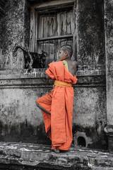 Chiang Mai Boy Monk and his Cat (R. Tgern) Tags: boy orange cat thailand monk chiangmai