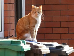 Looking back (stillunusual) Tags: uk england urban cat manchester streetphotography leve urbanlandscape m19 mcr urbanscenery 2016 levenshulme