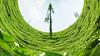 Half Tiny Planet :) (raveclix) Tags: india canon sigma kerala wayanad teaplantation incredibleindia sigma18200mmf3563dc canoneos400d digitalrebelxti raveclix