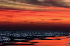 Beach Photography (l3v1k) Tags: sunset vacation seagulls beach birds photography joy springbreak 500px ifttt