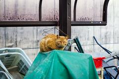 Today's Cat@2016-04-15 (masatsu) Tags: cat pentax catspotting mx1 thebiggestgroupwithonlycats
