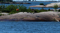 Bird skerries seen from the  Suomenlinna ferry (Etelsatama, Helsinki, 20150721) (RainoL) Tags: sea summer finland geotagged island helsinki july balticsea helsingfors fin uusimaa 2015 nyland kruunuvuorenselk 201507 20150721 geo:lat=6016015172 geo:lon=2497398302 kronbergsfjrden