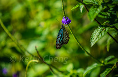 Taiwan-121113-211 (Kelly Cheng) Tags: travel color colour green tourism nature animals horizontal fauna butterfly daylight colorful asia day taiwan vivid nobody nopeople colourful traveldestinations  northeastasia