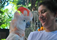 Key West (Florida) Trip 2015 0312Ri 5x7 (edgarandron - Busy!) Tags: bird birds keys florida parrot keywest cockatoo macaw floridakeys nancyforresterssecretgarden nancyforrester
