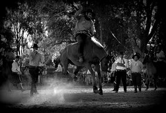 merson Nunes (Eduardo Amorim) Tags: brazil horses horse southamerica brasil criollo caballo cheval caballos cavalos pferde cavalli cavallo cavalo gauchos pferd riograndedosul pampa hest hevonen campanha brsil chevaux gaucho  amricadosul fronteira hst jaguaro gacho  amriquedusud  gachos  sudamrica suramrica amricadelsur  sdamerika crioulo caballoscriollos criollos jineteada   americadelsud gineteada  crioulos cavalocrioulo americameridionale caballocriollo eduardoamorim cavaloscrioulos