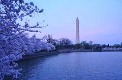Cherry Blossoms (Prakash Goteti) Tags: sky reflection monument nature water architecture cherry washingtondc washington blossoms capitol bloom cherryblossom cherryblossoms yearly cherryblossomdc prakashgoteti