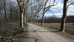 Tree-lined lakeside path (hugovk) Tags: cameraphone germany march nokia spring path lakeside hvk constance treelined badenwurttemberg carlzeiss 2016 808 kevt litzelstetten geo:country=germany hugovk camera:make=nokia pureview exif:flash=offdidnotfire exif:aperture=24 nokia808pureview exif:orientation=horizontalnormal exif:exposure=1183 camera:model=808pureview uploaded:by=email exif:exposurebias=0 exif:focallength=80mm exif:isospeed=64 geo:county=constance geo:region=badenwurttemberg meta:exif=1461729674 geo:locality=litzelstetten treelinedlakesidepath
