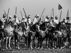 Morocco (mariamartins155) Tags: horses branco preto morocco cavalos marrocos cavaleiros