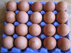 Dunnes Stores Better Value 20 Large hen Eggs 21052016 3.50 01-05-2016 - Tray 1 Egg Weights (Lord Inquisitor) Tags: brown eggs hen dunnes eggcarton eggbox heneggs eggweights 21052016