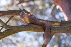 What's up?! :) (i0wa) Tags: nature squirrel estonia tallin mnnipark sigma70300f456apo canoneos40d