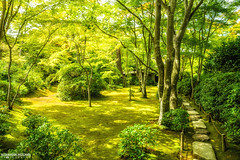 Arashiyama Mountain garden (Alexander.W.Photography) Tags: world travel red summer travelling green nature japan japanese ancient nikon view culture buddhism best  nippon tradition shinto japon nihon japani 2014 japn  honshu 2016 shintoism 2015 d610