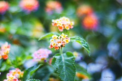 the only exception (Rana | FotoGraf - Bokeh Queen ♛) Tags: morning pink plants sunlight inspiration plant green love nature colors yellow garden 50mm morninglight spring rainbow nikon colorful colours dof thankyou purple bokeh outdoor wonderland 50mmf18d 50mm18 naturephotography rainbowcolors glowinginthedark nikon50mm18d colorseverywhere bokehlicious colorfulbokeh nikond90 naturebokeh colourfulbokeh naturecrap bokehmadness bokehobsession nikond9050mm18 rushofcolors rushofcolours